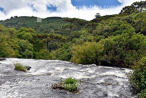 Trecho do Arroio do Caracol no Parque Estadual do Caracol com a torre do Observatório Ecológico ao fundo  - Canela - Rio Grande do Sul (RS) - Brasil
