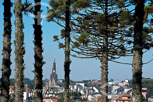 Floresta de araucária (Araucaria angustifolia) na Serra Gaucha com a Paróquia de Nossa Senhora de Lourdes - também conhecida como Catedral de Pedra - ao fundo  - Canela - Rio Grande do Sul (RS) - Brasil