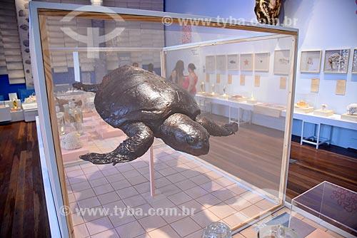 Réplica de tartaruga marinha na Exposição Celacanto em exibição no Museu Nacional - antigo Paço de São Cristóvão  - Rio de Janeiro - Rio de Janeiro (RJ) - Brasil
