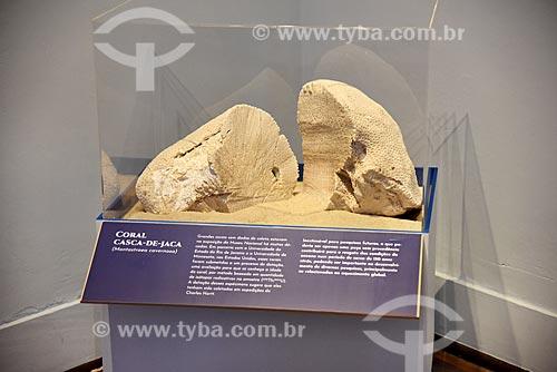 Coral casca-de-jaca (Montastraea cavernosa) em exibição no Museu Nacional - antigo Paço de São Cristóvão  - Rio de Janeiro - Rio de Janeiro (RJ) - Brasil
