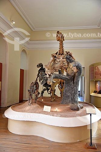 Fósseis de tigre-dentes-de-sabre Smilodon e preguiças-gigantes em exibição no Museu Nacional - antigo Paço de São Cristóvão  - Rio de Janeiro - Rio de Janeiro (RJ) - Brasil