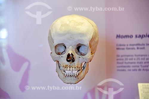Crânio de Homo sapiens em exibição no Museu Nacional - antigo Paço de São Cristóvão  - Rio de Janeiro - Rio de Janeiro (RJ) - Brasil