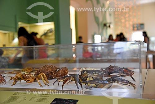 Crustáceos em exibição no Museu Nacional - antigo Paço de São Cristóvão  - Rio de Janeiro - Rio de Janeiro (RJ) - Brasil