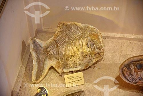 Detalhe de fóssil em exibição no Museu Nacional - antigo Paço de São Cristóvão  - Rio de Janeiro - Rio de Janeiro (RJ) - Brasil
