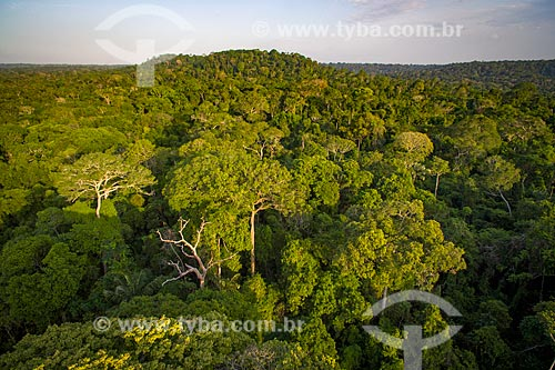 Foto aérea da Floresta Nacional do Tapajós  - Santarém - Pará (PA) - Brasil