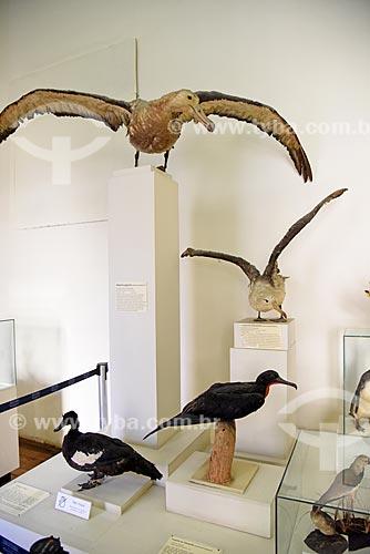 Aves empalhadas em exibição no Museu Nacional - antigo Paço de São Cristóvão  - Rio de Janeiro - Rio de Janeiro (RJ) - Brasil