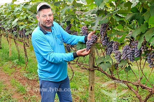 Detalhe de trabalhador rural em Parreiral de uva Niagara  - São Francisco - São Paulo (SP) - Brasil