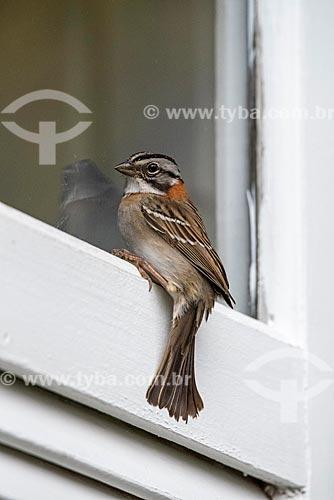 Detalhe de ave na Área de Proteção Ambiental da Serrinha do Alambari  - Resende - Rio de Janeiro (RJ) - Brasil