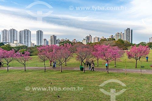 Vista de cerejeiras no Jardim Botânico de Curitiba (Jardim Botânico Francisca Maria Garfunkel Rischbieter)  - Curitiba - Paraná (PR) - Brasil