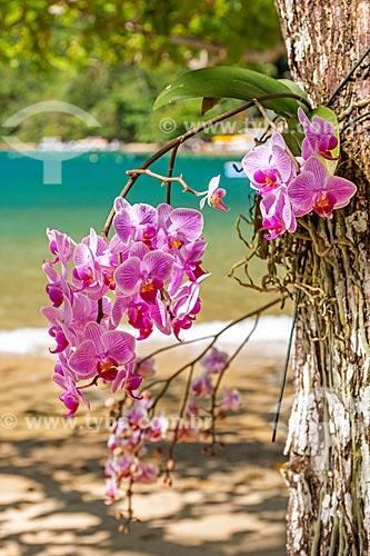 Detalhe de orquídea em praia na orla da Baía de Ilha Grande  - Angra dos Reis - Rio de Janeiro (RJ) - Brasil
