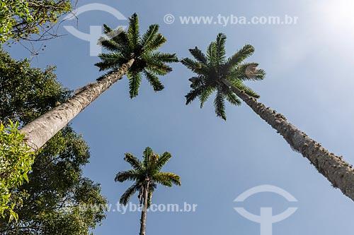 Detalhe de palmeiras imperiais na Vila de Dois Rios  - Angra dos Reis - Rio de Janeiro (RJ) - Brasil