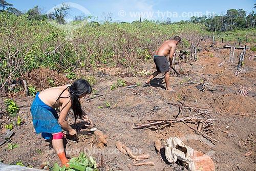 Detalhe de casal indígena da aldeia Aiha da tribo Kalapalo colhendo mandioca - ACRÉSCIMO DE 100% SOBRE O VALOR DE TABELA  - Querência - Mato Grosso (MT) - Brasil