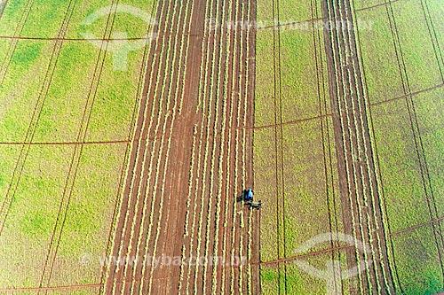 Foto feita com drone de colheita mecanizada de feijão  - Guaíra - São Paulo (SP) - Brasil