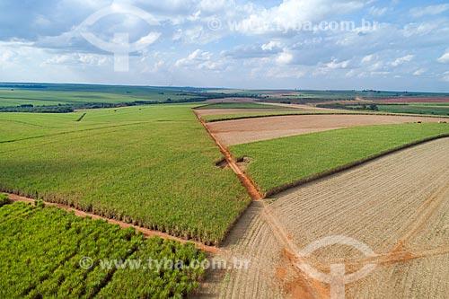 Foto feita com drone de canavial  - Jaboticabal - São Paulo (SP) - Brasil