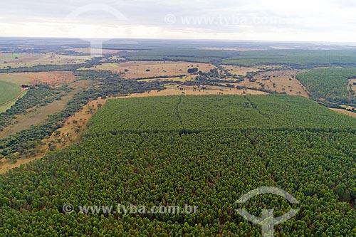 Foto feita com drone da plantação de eucalipto  - Uberlândia - Minas Gerais (MG) - Brasil