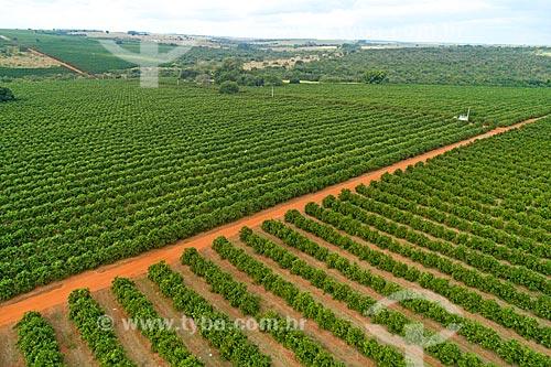 Foto feita com drone de pomar de laranjas  - Uberlândia - Minas Gerais (MG) - Brasil