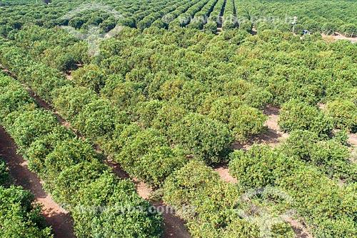 Foto feita com drone de pomar de laranjas  - Bebedouro - São Paulo (SP) - Brasil