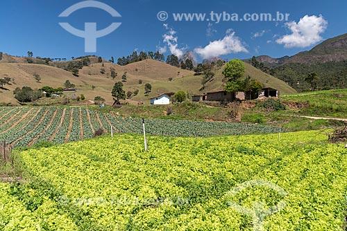 Plantação de vegetais próximo ao Parque Estadual dos Três Picos  - Teresópolis - Rio de Janeiro (RJ) - Brasil