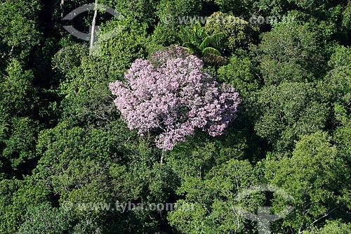 Foto aérea de vegetação típica da amazônia  - Amazonas (AM) - Brasil