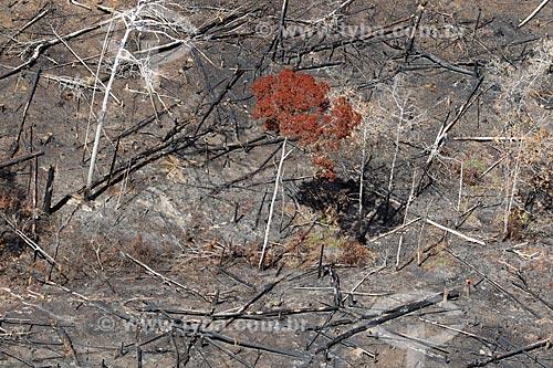 Foto aérea de árvore em meio à queimada em vegetação típica da amazônia próximo à cidade de Manacapuru  - Manacapuru - Amazonas (AM) - Brasil