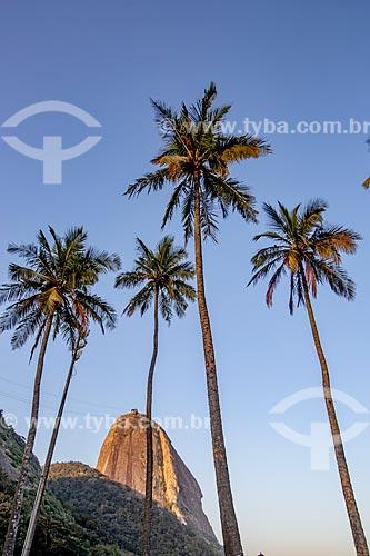 Vista do Pão de Açúcar a partir da orla da Praia Vermelha  - Rio de Janeiro - Rio de Janeiro (RJ) - Brasil