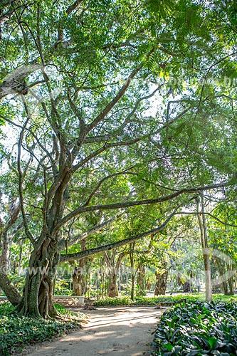 Vegetação no Jardim Botânico do Rio de Janeiro  - Rio de Janeiro - Rio de Janeiro (RJ) - Brasil