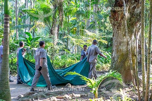 Funcionários do Jardim Botânico do Rio de Janeiro carregando às folhas secas  - Rio de Janeiro - Rio de Janeiro (RJ) - Brasil