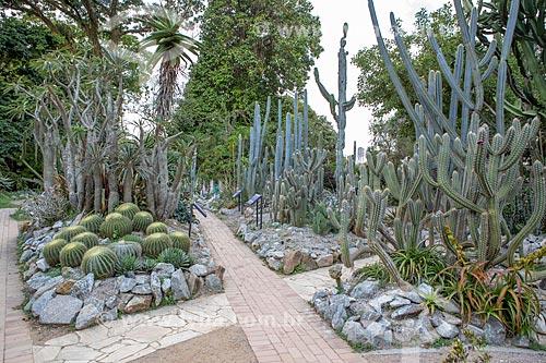 Interior do cactário do Jardim Botânico do Rio de Janeiro  - Rio de Janeiro - Rio de Janeiro (RJ) - Brasil