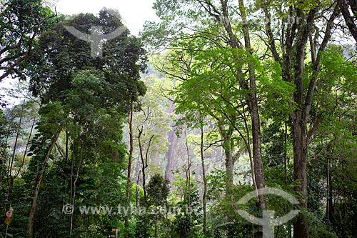 Vista da vegetação típica da Mata Atlântica no Parque Nacional da Tijuca  - Rio de Janeiro - Rio de Janeiro (RJ) - Brasil
