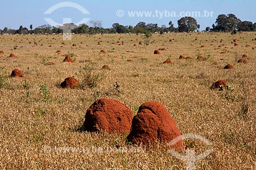 Cupinzeiros em meio à vegetação típica do cerrado  - Jardim - Mato Grosso do Sul (MS) - Brasil