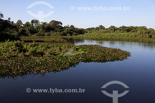 Vista do corixo São Domingos - afluente do Rio Miranda  - Miranda - Mato Grosso do Sul (MS) - Brasil