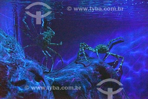 Detalhe de caranguejos-gigante-japonês (Macrocheira kaempferi) no AquaRio - aquário marinho da cidade do Rio de Janeiro  - Rio de Janeiro - Rio de Janeiro (RJ) - Brasil