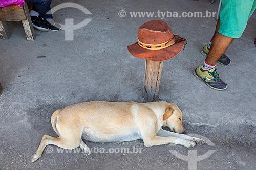 Cachorro dormindo na Aldeia Mata Verde Bonita (Tekoa Ka Aguy Ovy Porã) da Tribo Guarani  - Maricá - Rio de Janeiro (RJ) - Brasil