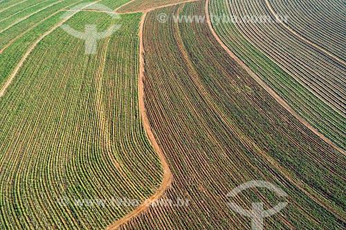 Foto feita com drone de canavial rebrotando  - Taquaritinga - São Paulo (SP) - Brasil