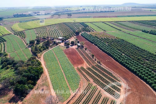 Foto feita com drone da plantação de pimentão e abóbora com pomar de manga - à direita - e canavial ao fundo  - Taquaritinga - São Paulo (SP) - Brasil