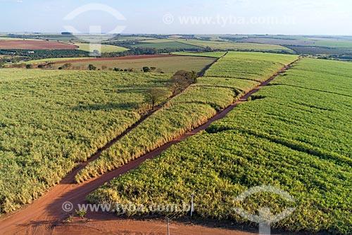Foto feita com drone de canavial  - Taquaritinga - São Paulo (SP) - Brasil