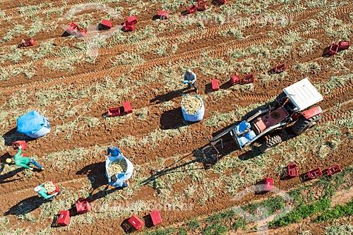 Foto feita com drone da colheita de cebola  - Monte Alto - São Paulo (SP) - Brasil