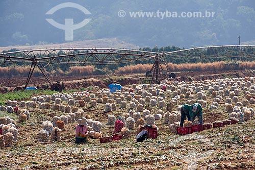 Trabalhadores rurais colhendo cebola com pivô central ao fundo  - Monte Alto - São Paulo (SP) - Brasil