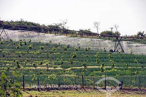 Pivô central irrigando plantio consorciado de cebola (Allium cepa) e pomar de limão  - Taquaritinga - São Paulo (SP) - Brasil