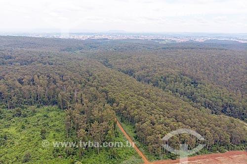 Foto feita com drone de plantação de eucalipto na Floresta Estadual Edmundo Navarro de Andrade (FEENA) - antigo Horto Florestal Municipal Edmundo Navarro de Andrade  - Rio Claro - São Paulo (SP) - Brasil