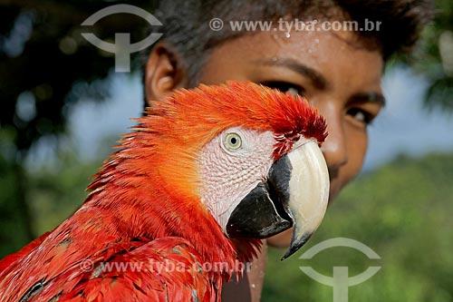 Criança ribeirinha com Arara-vermelha (Ara chloropterus) - também conhecida como araracanga ou arara-macau - às margens do Rio Uatumã  - Amazonas (AM) - Brasil