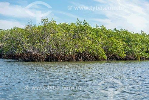 Manguezal às margens do Rio São Francisco  - Piaçabuçu - Alagoas (AL) - Brasil