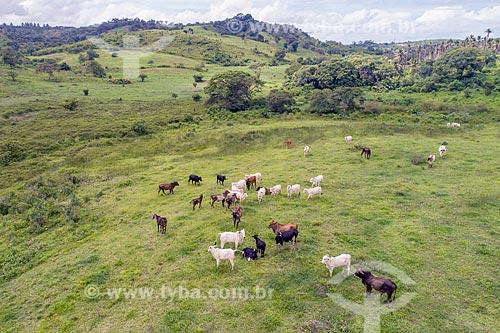 Foto feita com drone de gado no pasto na zona rural da cidade de Pacatuba  - Pacatuba - Sergipe (SE) - Brasil