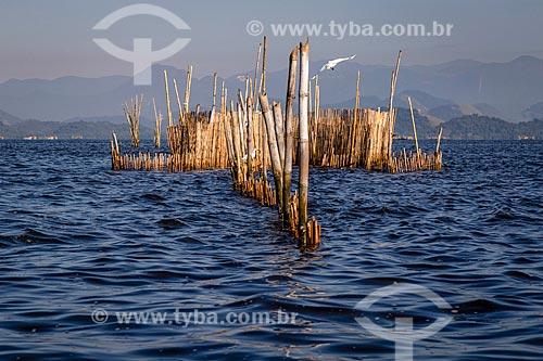 Curral de pesca na Baía de Guanabara  - Magé - Rio de Janeiro (RJ) - Brasil
